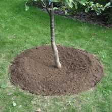 Уход за приствольными кругами плодовых деревьев