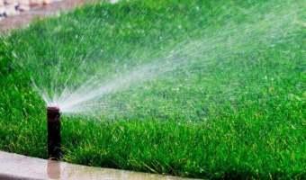поливать газон летом