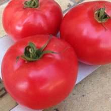 Сорт томатов Афен f1