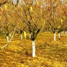 Осенняя обработка сада от вредителей и болезней