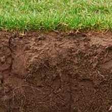 Какие цветы растут на глинистой почве