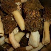 Какие грибы появляются первыми