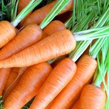 Проводим посев моркови по всем правилам, соблюдая сроки посева