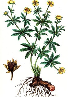 Роль корней в жизни растений