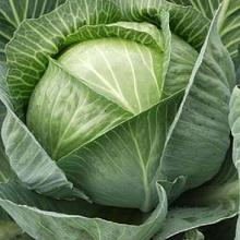 Технология выращивания овощей в северных районах