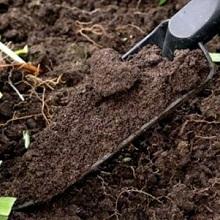 Как узнать какая почва